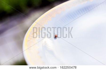 Little bug creeps on big white plate