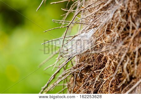 Animals houses forest beauty nature concept. Closeup of cobweb on moss tree branches.