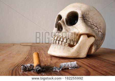 Close up of Human skull model and cigarette stub