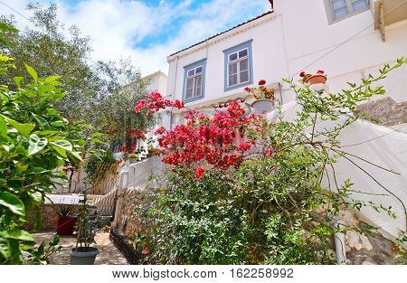traditional houses with red bougainvilleas at Hydra Greece