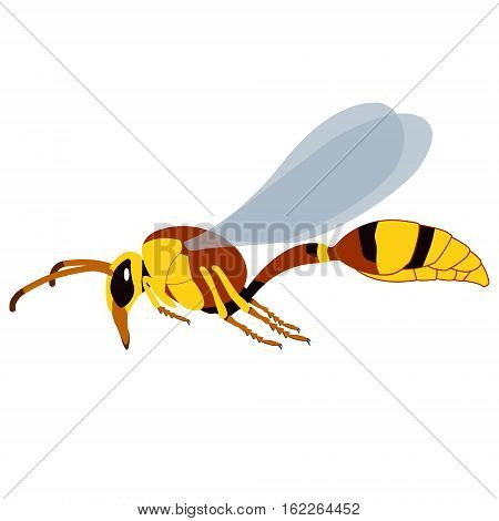 Realistic Wasp. Vector concept illustration for design.