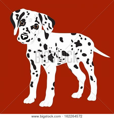 Dalmatians, cute puppy, sad. Vector Illustration Portrait of Dalmatian Puppy. Dog isolated