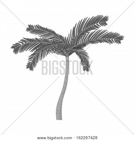 Mexican fan palm icon in monochrome style isolated on white background. Mexico country symbol vector illustration.