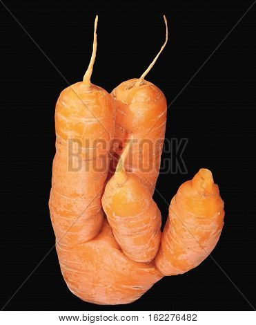 Carrot with four prong on black background
