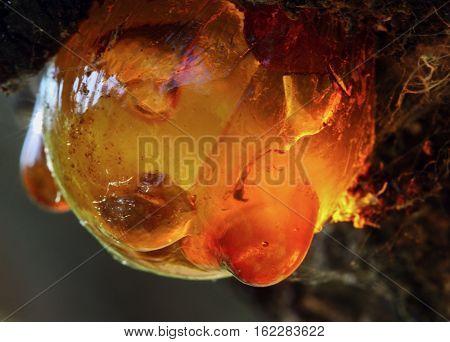 Globular resin, interesting ephemera on a tree