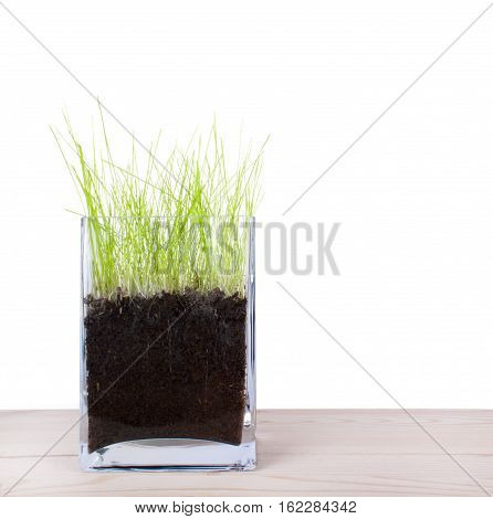 Green grass on white background. Nature background