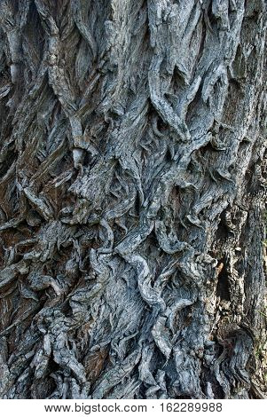 foto old tree bark in the summer