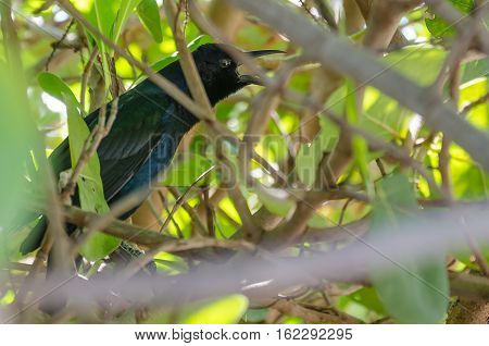Black And Gray Bird Sits On A Branch
