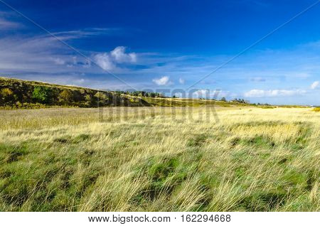 Gras and heath landscape on Sylt island.