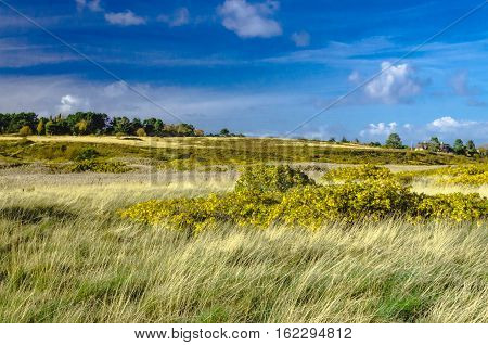 Kampen Sylt: beautiful heath and gras landscape.