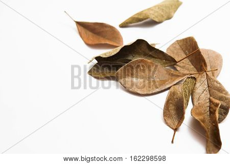 Dry leaves on white background, autumn concept