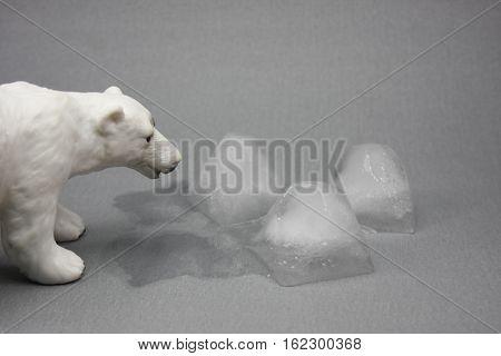 polar bear polar melting buzul erimesi kutup ayısı