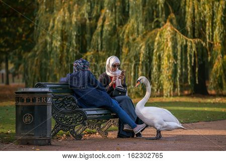 LONDON GREAT BRITAIN - OCTOBER 31 2016: A woman taking picture of a swan in Hyde Park.