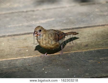 Beautiful Image With A Bird On The Wooden Floor