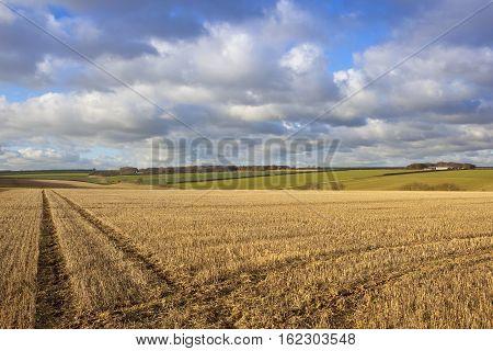 Yorkshire Wolds Vista
