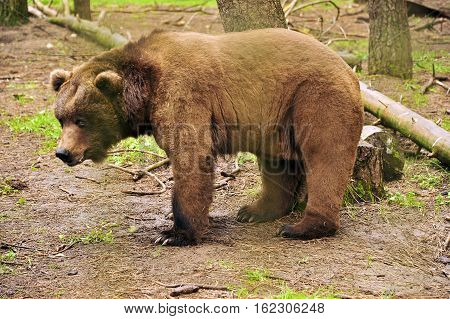 This is a photo of a bear.
