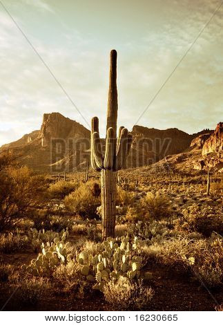 Wild west desert trail to Superstition Mountain with Saguaro cactus tree. Image has been color toned.