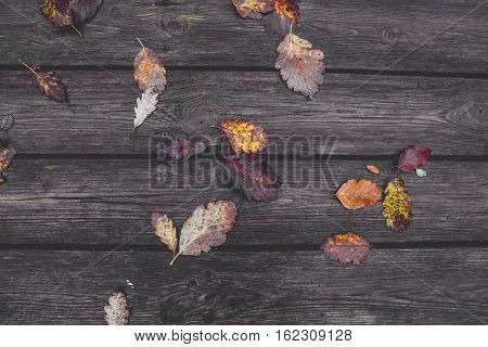 Colorful Autumn Leaves In The Fall