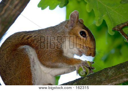 Squirrel Lunch