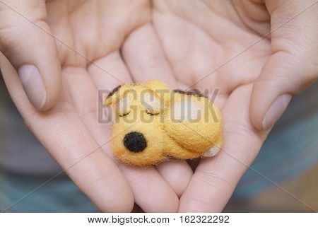 Small dog in human hands. Care dog concept. Care pet concept