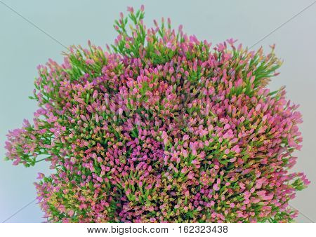 Bouquet of  Centaurium  erythraea small pink buds