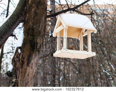 Bird Feeder On Tree Branch In Urban Park In Winter
