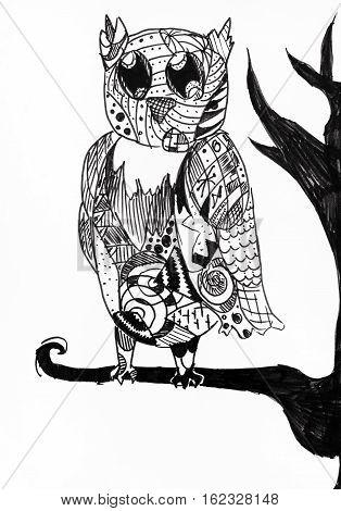 Owl Sit On Tree Branch