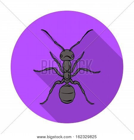 Ant icon in flat design isolated on white background. Insects symbol stock vector illustration.