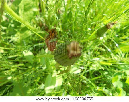 este o poza cu iarba verde si papadii