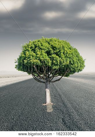 Creative green tree in the middle of road. Success concept