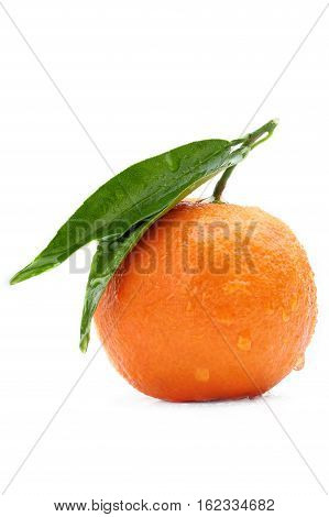 one tangerine with leaf on a white background.