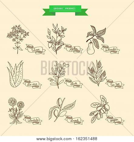 Vector illustration of a plant - aloe vera, tutsan, lavender, jojoba, almond, olive, klendula, tea tree, argan, cocoa, avocado, Ylang-Ylang, clove. plants collection.