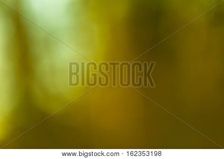 Winter Forest Bokeh Background