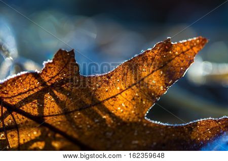 Close Up Of Fallen Leaf With Rime