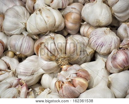 Ripe fresh garlic for sale on market