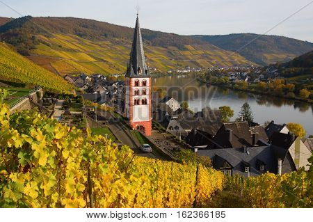 Church Of Merl, Germany, With Autumnal Vineyards