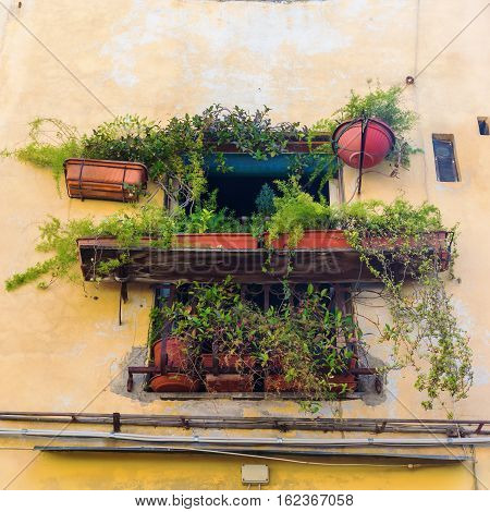Plant Decorated Window In Lucca, Italy