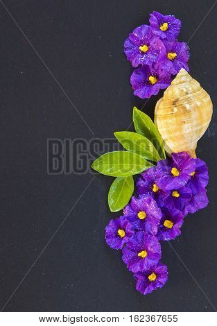 Flowers on a stone with free space to write