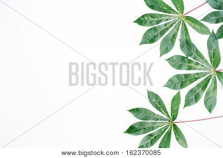 green palm branches on white background. flat lay top view
