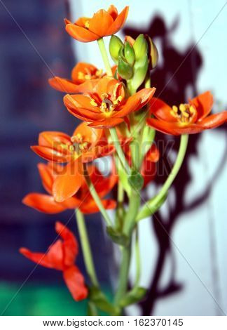 Beautiful Orange orchid flowers on blurred background. Closeup shot.