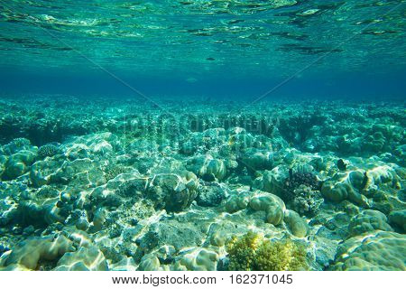 Tranquil underwater scene with copy space