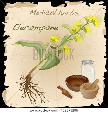Medical herbs collection . Elecampare illustration .