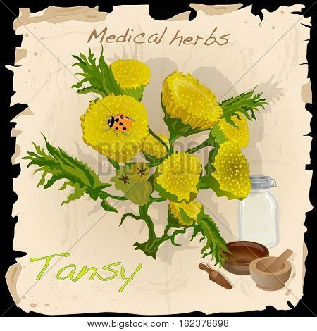 Tansy herb. Image isolated on white background.