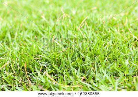 Green Grass Close Up Background