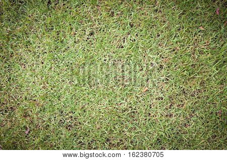 Green Grass Surface Background