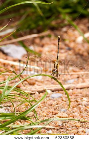 Yellow And Black Pattern Dragon Fly On Grass