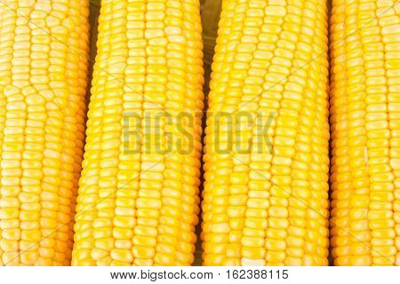 sweet corn on cobs kernels or grains of ripe corn on white background corn vegetable isolated
