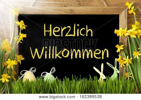 Blackboard With German Text Herzlich Willkommen Means Welcome. Sunny Spring Flowers Nacissus Or Daffodil With Grass, Easter Egg And Bunny. Rustic Aged Wooden Background.