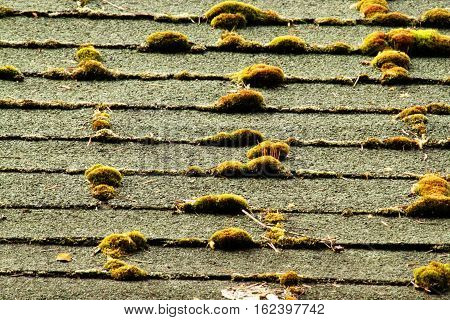 Old mossy asphalt roofing shingles in need of replacement