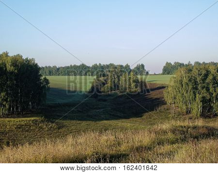 Field with wheat germ in Russia in the summer